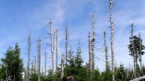 Waldschäden Harz